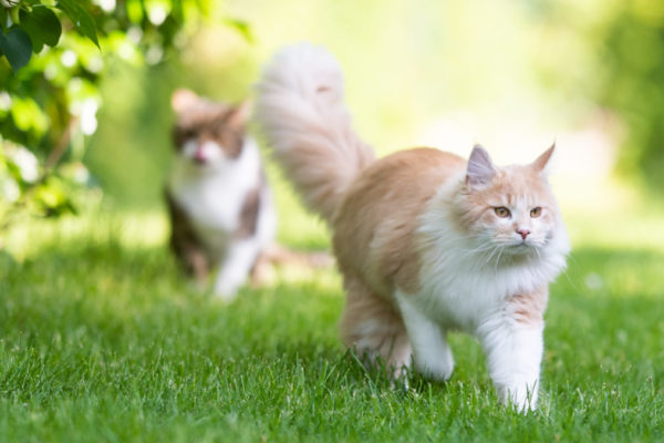 What to Do If Your Cat Is Overweight or Obese
