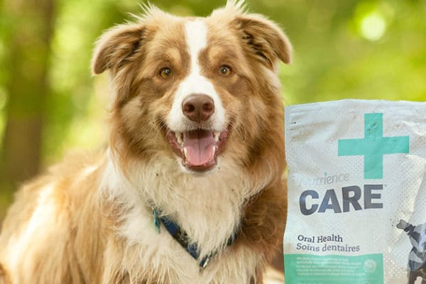 Transitioning Your Dog or Cat Onto Nutrience