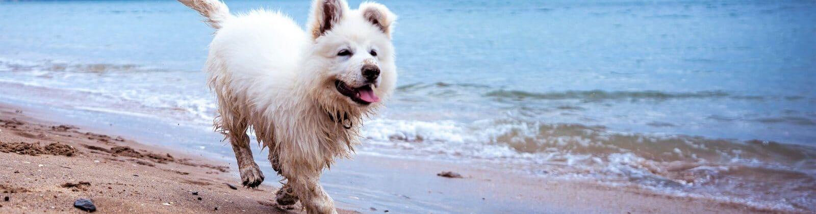 dog anxiety hyperactivity
