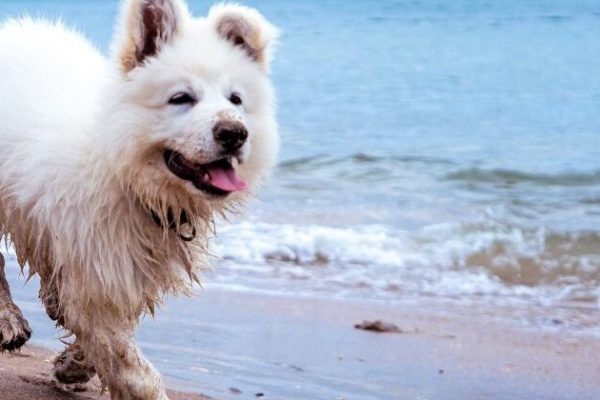 Does your dog have anxiety or hyperactivity related issues?