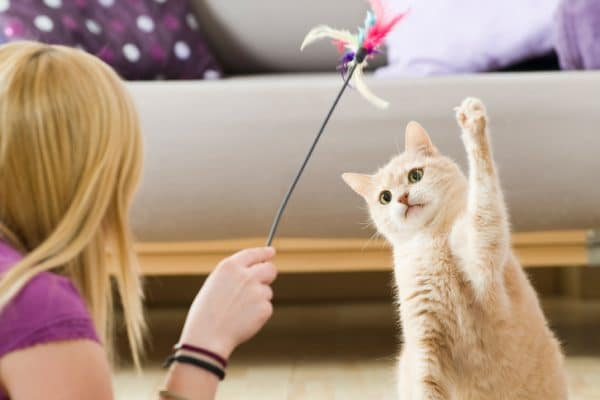 Exercises to Promote Weight Loss in Cats
