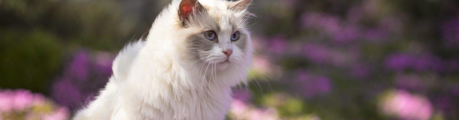 cat urinary problems