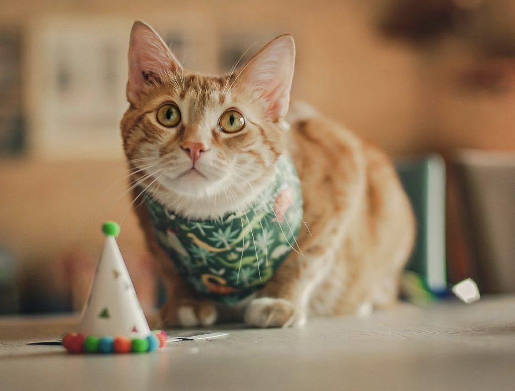 pet birthday