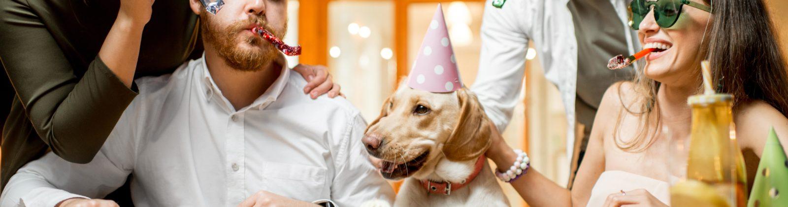 pet birthday celebrate