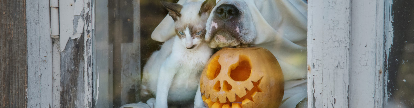 Halloween costumes dogs cats 2021