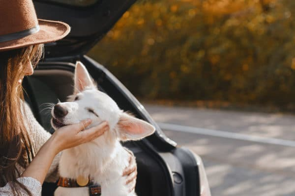 Mon chien reçoit-il assez d'amour?