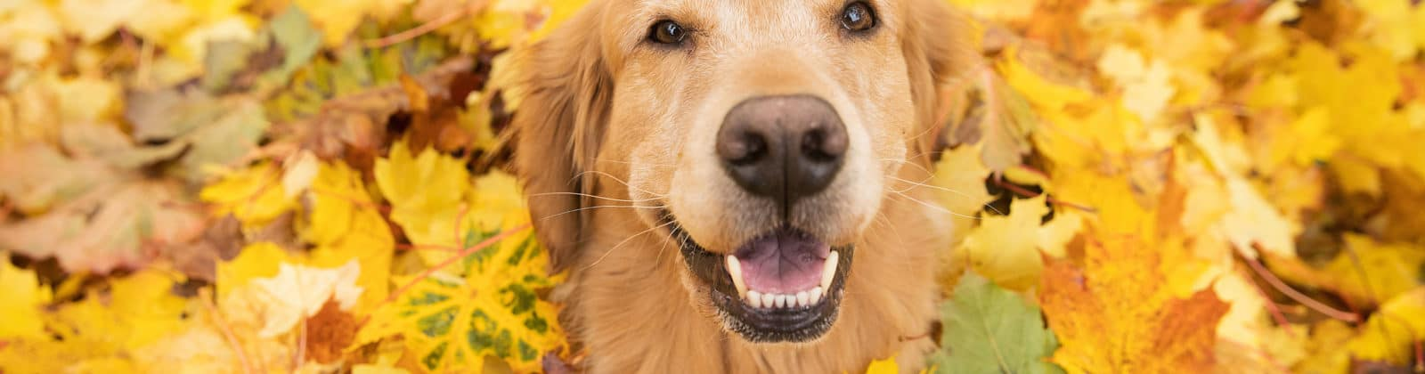 dog play leaves safe