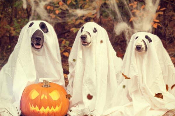 Best Halloween Costume Ideas for Dogs and Cats in 2021