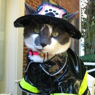 cat firefighter costume