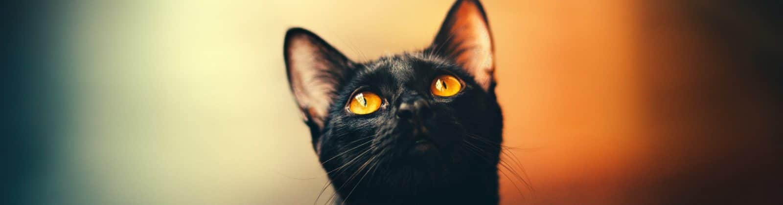 cats dogs superstitions myths