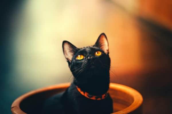 5 mythes et superstitions sur les chats et les chiens