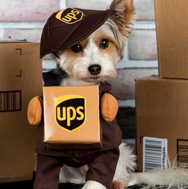 ups dog costume halloween